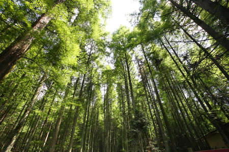 natural resource: rare plants, located in china Stock Photo