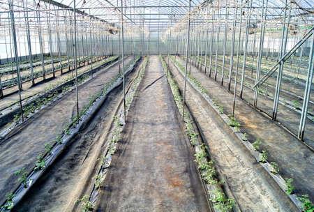 seeding: green seeding at greenhouse
