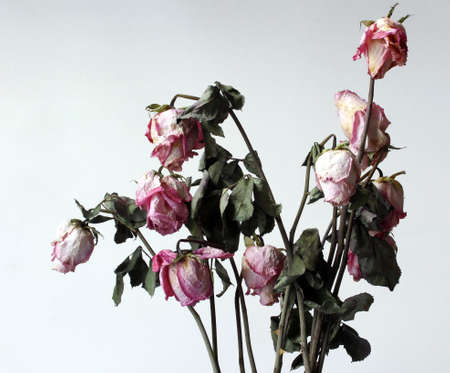 atrophy: Withered flowers, dried, withered, in the white environment  Stock Photo