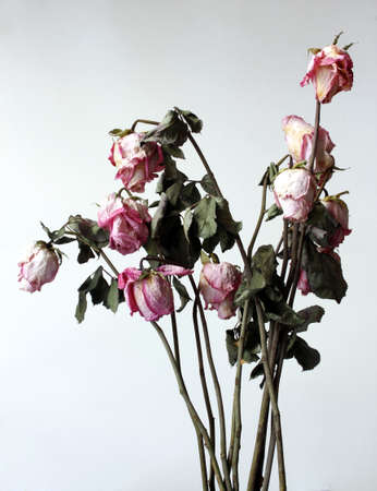 atrophy: Withered flowers, dried, withered, in a white environment.