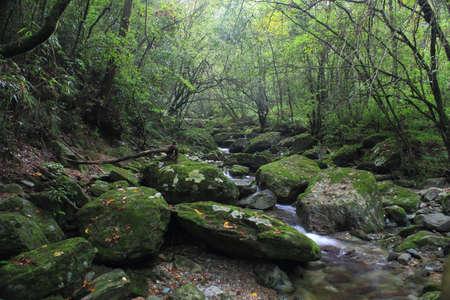 limpid: Dense quiet jungle flow limpid mountain stream Stock Photo