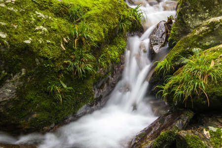 The green moss covered rocks and limpid stream flows Stock Photo