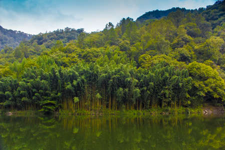 The still water of the lake and green lush bamboo forest