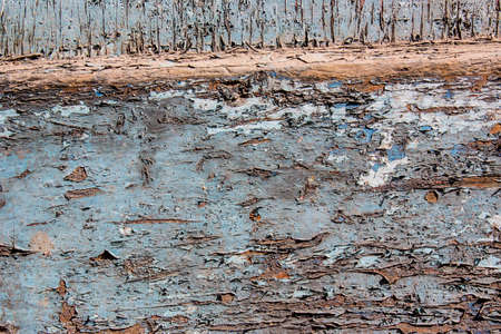 weathering: Blue gray color mottled paint weathering cracked wooden close-up