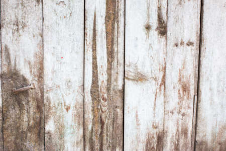mottled: The color white mottled paint weathering cracked wooden close-up