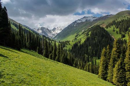 The beautiful green prairie landscape.