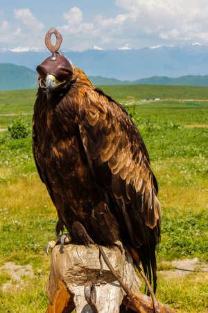 prairie Eagle
