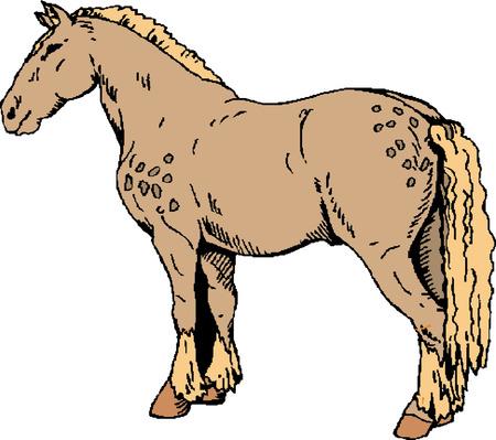 nostrils: Illustration of a horse
