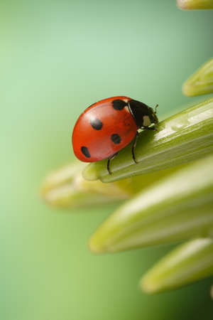 ladybug on leaf photo