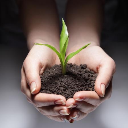 plantando arbol: brotes verdes en mano de la mujer