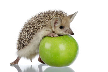 little hedgehog and green apple photo