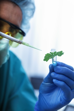 diseased plant in test tube Stock Photo - 10584656