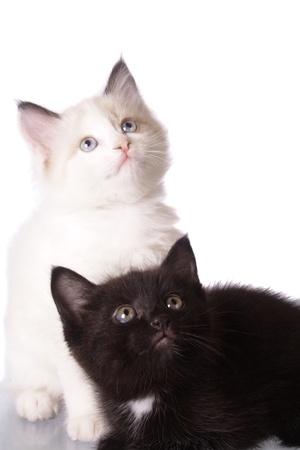 kittens photo
