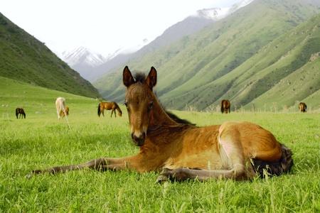 horse Stock Photo - 11400096