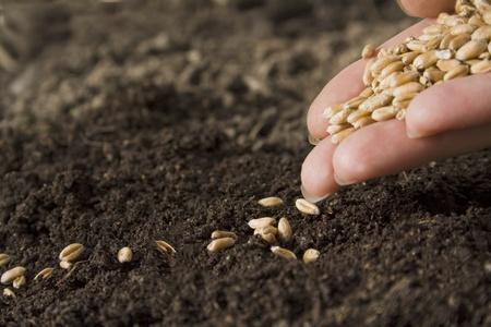 siembra: la siembra de semillas Foto de archivo