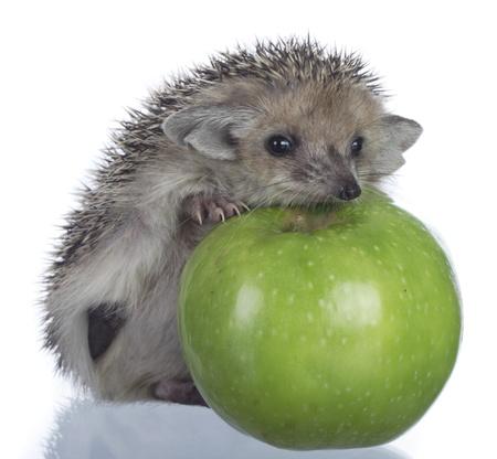 hedgehog and apple 版權商用圖片