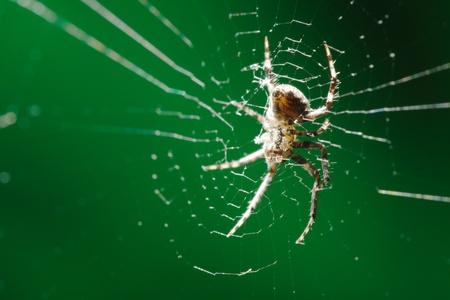 bubble acid: spider
