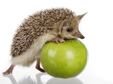 egel en appel Stockfoto
