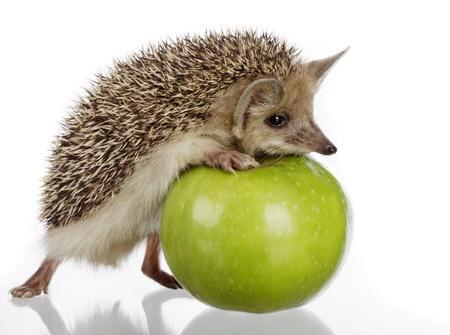 hedgehog: hedgehog and apple