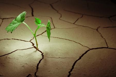 plantas del desierto: cprout en el área de secante