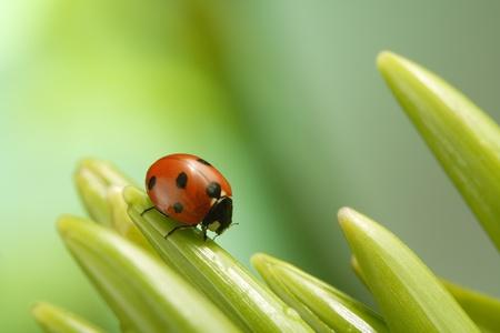 macro animals: ladybug Stock Photo