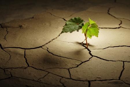 überleben: cprout in d�rren Region