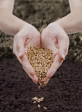 seeding: sowing seed