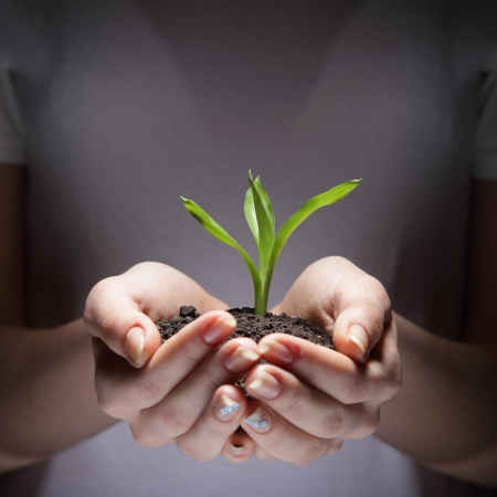 growth protection: sprout Stock Photo