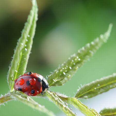 ladybug on leaf photo