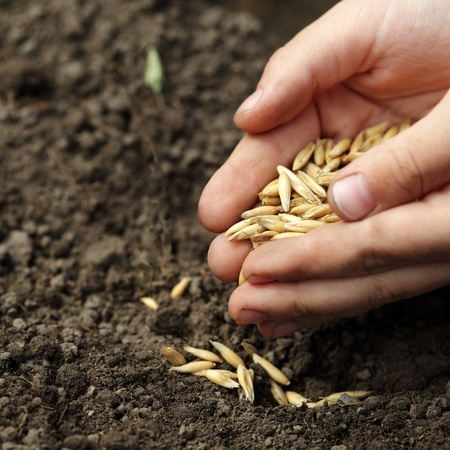sowing: children hand sowing seed