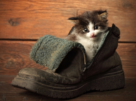 young kitten in old boot photo