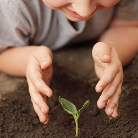 tree planting: sprout in children hand Stock Photo