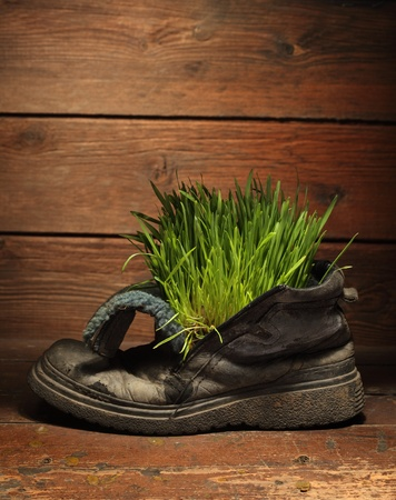 green grass in grunge boot photo