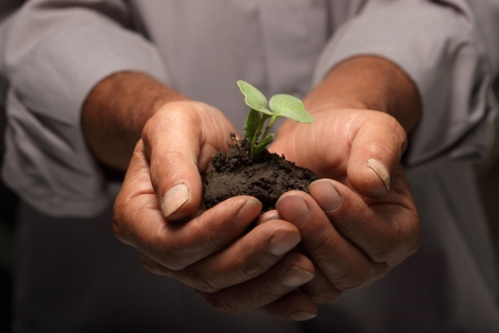 growth business: green sprout in senior man hand Stock Photo