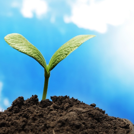 在天空背景的绿色新芽