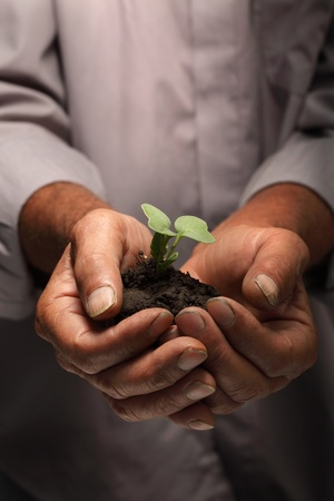 green sprout in senior man hand Stock Photo