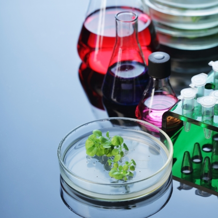 plant science: lab Stock Photo