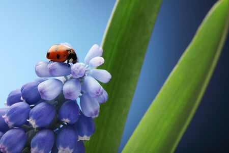 ladybug on flower photo
