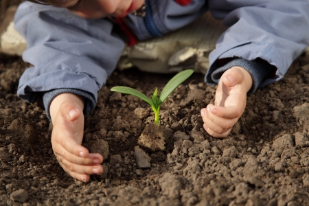 plantando arbol: brotar en la mano los ni�os