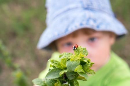 baby 4 5 years: little boy look red ladybird