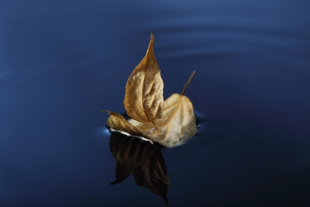 Leaf ship in blue water photo