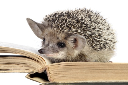 spiked hair: cute hedgehogs read book
