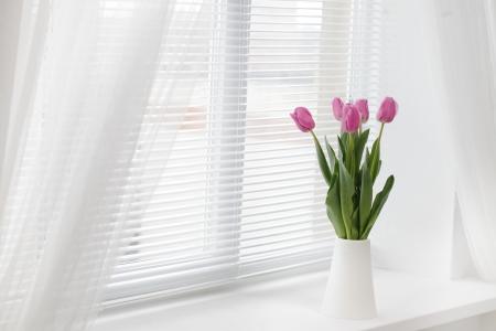 tulipan: tulipan w pokoju Zdjęcie Seryjne