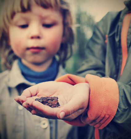 children see a toad found in the forest  focus on toad  photo