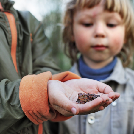 baby 4 5 years: children see a toad found in the forest  focus on toad