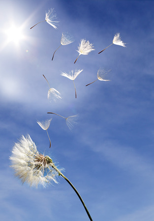 people and nature: flying dandelion seeds on a blue background