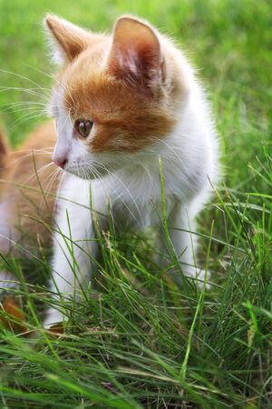 kitten on green grass photo