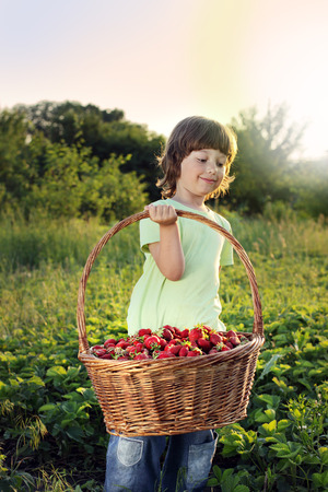 6 7 years: cheerful boy with basket of strawberry