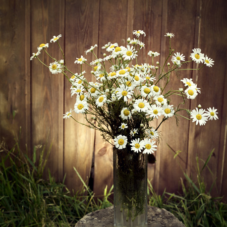 glass fence: bouquet of daisies in the garden on a tree stump