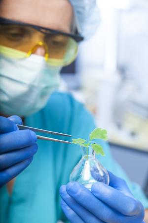 diseased: scientist holding diseased plant Stock Photo